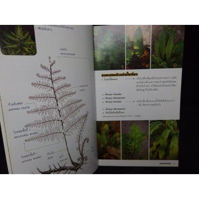 画像2: タイのシダ類ポケット図鑑